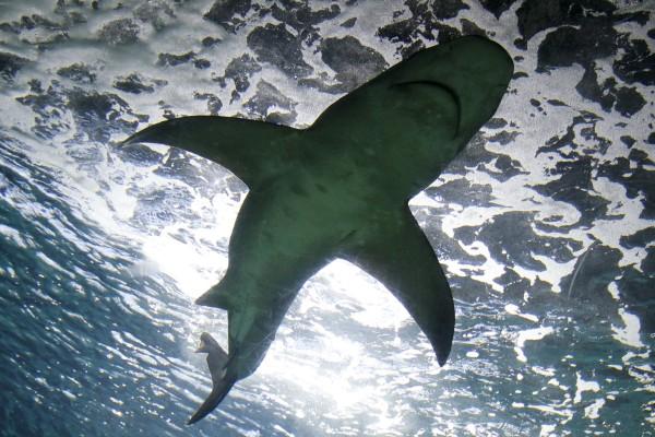 Επικό video: Ψαροντουφεκάς ήρθε αντιμέτωπος με δυο καρχαρίες και τους νίκησε μόνο με τα χέρια του!
