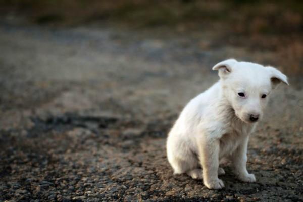 Κέρκυρα: Σκότωσε σκύλο εν ψυχρώ μπροστά στα μάτια των περαστικών!