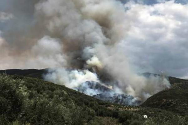 Φωτιά σε δάσος στα Διάσελλα Ηλείας - Στο σημείο σπεύδουν ισχυρές πυροσβεστικές δυνάμεις