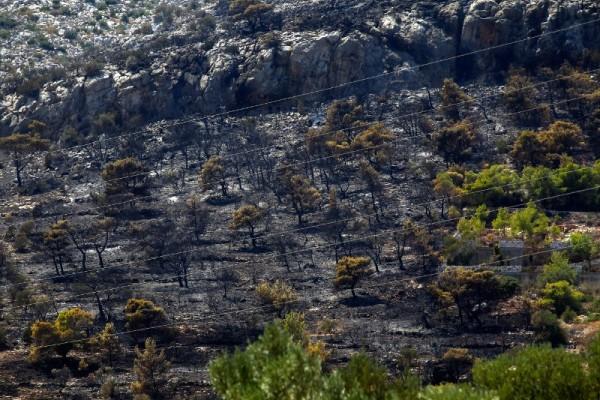Καλά τα νέα από το μέτωπο της πυρκαγιάς στο Κορωπί: Σε ύφεση η φωτιά!