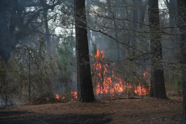 Μεσσηνία: Μεγάλη πυρκαγιά ξέσπασε σε δασική περιοχή!