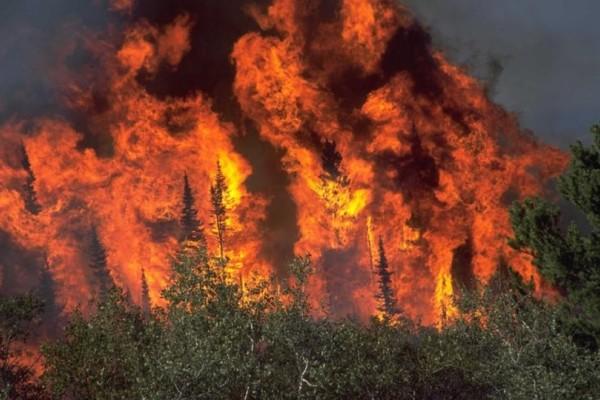 Πυρκαγιά ξέσπασε στη Θήβα