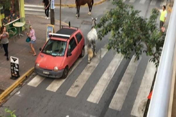 Απίστευτο περιστατικό στην Κατερίνη: Τα άλογα βγήκαν... βόλτα στους δρόμους! (Photo)