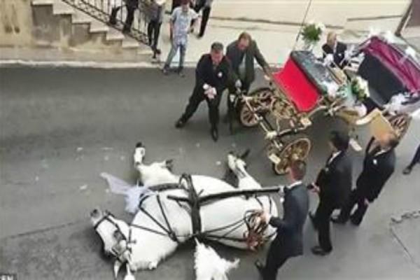 Άλογο μετέφερε νεόνυμφο ζευγάρι και κατέρρευσε στα μισά της διαδρομής: Δείτε το απίστευτο video!