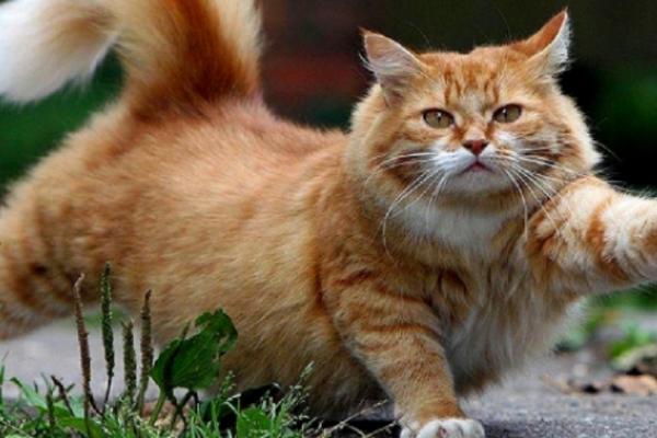 Κρήτη: 9 χρόνος μολύνθηκε από γάτες - 600 ευρώ πρόστιμο στην ηλικιωμένη που τις φρόντιζε (Photo)