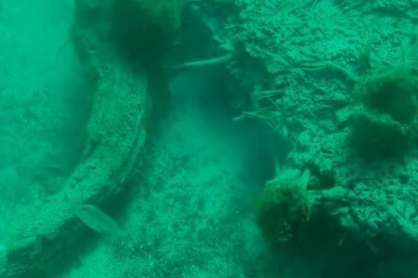 Υποβρύχιο δάσος ανακαλύφθηκε στον Κόλπο του Μεξικού!