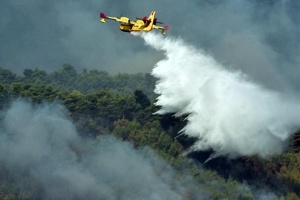 Πυρκαγιά σε δασική περιοχή στα Καλάβρυτα: Φλέγεται έκταση με έλατα!