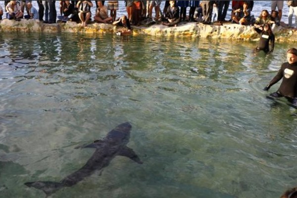 Καρχαρίας κολυμπά δίπλα σε λουόμενους ζητώντας βοήθεια! (video)