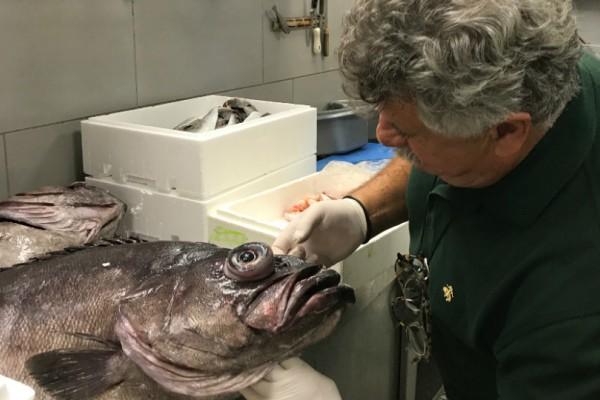 Ο σεφ Λευτέρης Λαζάρου προειδοποιεί:  Αυτά τα ψάρια δεν πρέπει με τίποτα να φάμε μετά την πετρελαιοκηλίδα!