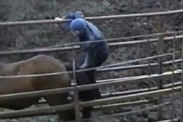 Τον έπιασε να την απατά με ένα... άλογο! Έξαλλη η «απατημένη» (Photo)