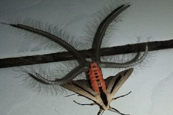 Το αξιοπερίεργο έντομο που προκάλεσε τον απόλυτο πανικό στην Αυστραλία!