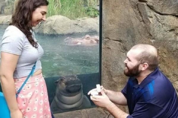 Το πιο γλυκό photobombing: Ιπποπόταμος ποζάρει την ώρα που ζευγάρι αρραβωνιάζεται! (Video)
