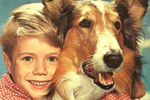 Η άγνωστη ιστορία πίσω από την Λάσι - Γνωρίζατε τι απέγινε το σκυλί του γνωστού σήριαλ; (video)