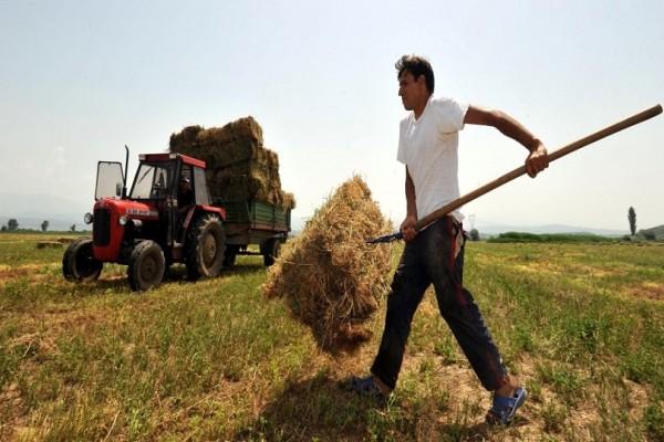 Δυσάρεστες εκπλήξεις για χιλιάδες αγρότες - «Ψαλιδισμένες» κατά 10% οι επιδοτήσεις
