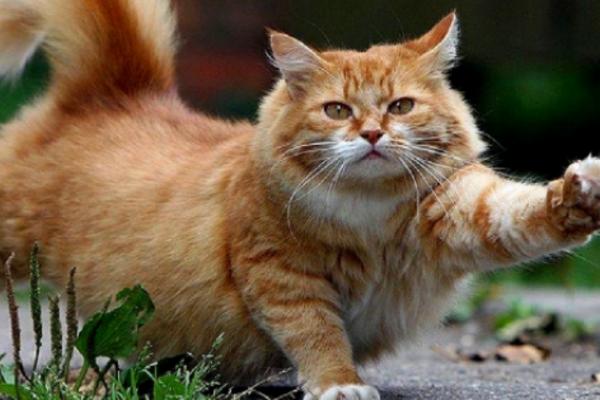 Σε αδιέξοδο οι αρχές στην Αυστραλία: Οι γάτες σκοτώνουν καθημερινά περισσότερα από 1 εκατ. πουλιά!