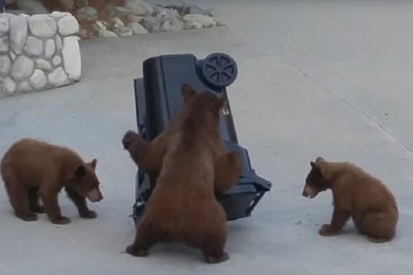 Τα 3 αξιολάτρευτα αρκουδάκια που έγιναν viral! - Προσπάθησαν να κλέψουν τον κάδο μιας γυναίκας! (Photo)