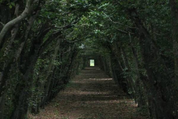 Απελπισμένος σύζυγος ζούσε για 10 χρόνια σε δάσος για να γλυτώσει από... την γυναίκα του!