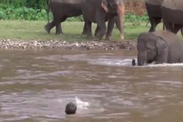 Προβοσκίδα... σωτηρίας: «Διασώστης» ελέφαντας προστατεύει έναν άντρα που παρασύρθηκε από ποτάμι! (video)