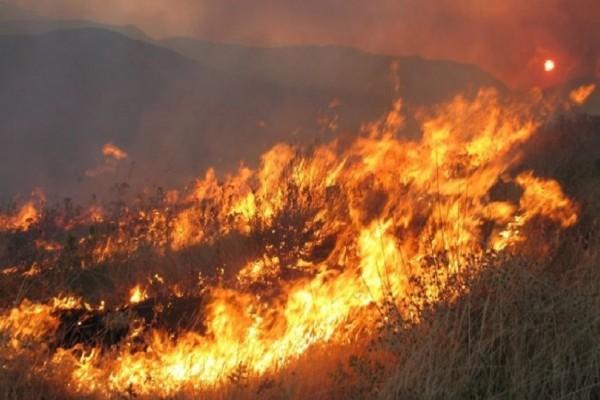 Πυρκαγιά ξέσπασε σε προστατευόμενη δασική περιοχή στην Αχαΐα