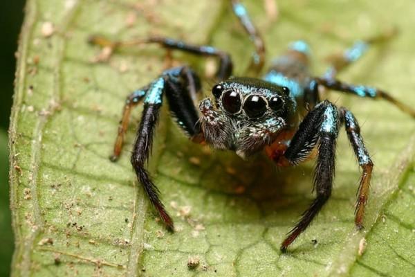 Ανεπιθύμητοι επισκέπτες: 150 εκατομμύρια αράχνες έτοιμες να εισβάλουν στα βρετανικά σπίτια!