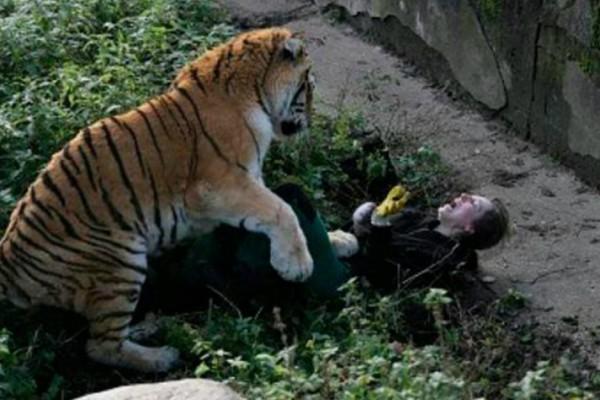 Συγκλονίζει η φύλακας που της επιτέθηκε τίγρης σε ζωολογικό κήπο: «Με έσωσαν οι επισκέπτες»