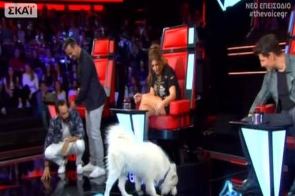 The Voice: Χαμός με τον σκύλο που εισέβαλε στο πλατό και κέρδισε τις εντυπώσεις! Κατάφερε να... περάσει στην επόμενη φάση; (video)