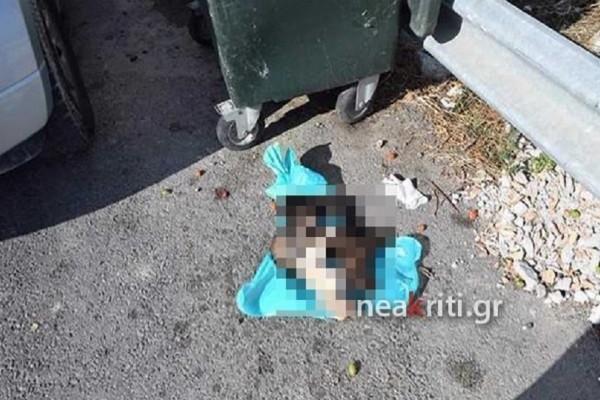 Βίντεο σοκ: Σκότωσαν κουταβάκια και τα πέταξαν στα σκουπίδια!