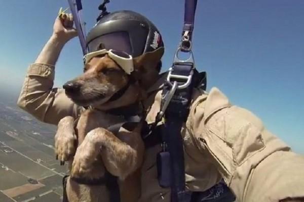 Επικό βίντεο: Σκύλος έκανε Skydiving μαζί με το αφεντικό του!