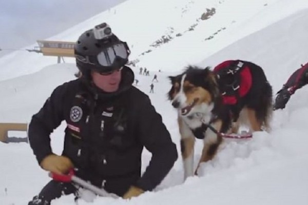 Ο σκύλος που έχει γίνει viral! - Έχει εκπαιδευτεί για να σώζει ανθρώπους που έχουν εγκλωβιστεί σε χιονοστιβάδες!