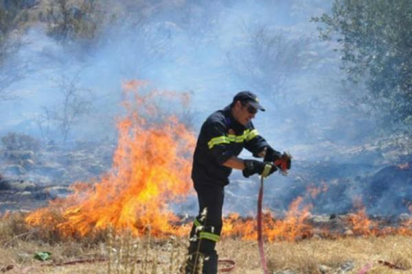 Έκτακτο: Φωτιά σε ελατοδάσος στα Καλάβρυτα