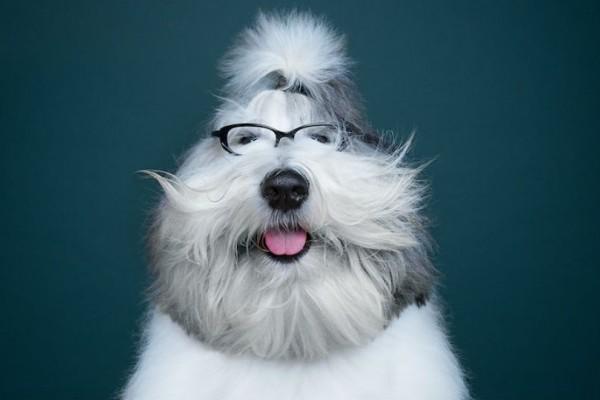 Εκφράσεις σκύλων που δείχνουν τόσο ανθρώπινες.. (photo)