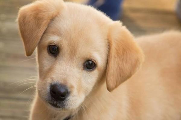 Φρίκη στον Βόλο: Μαζική θανάτωση σκύλων: Νεκρά 23 κουταβάκια!