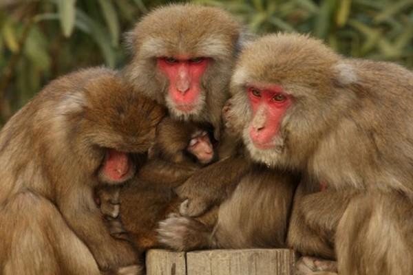 Τα 10 είδη ζώων που η ομοφυλοφιλία είναι συχνό φαινόμενο!