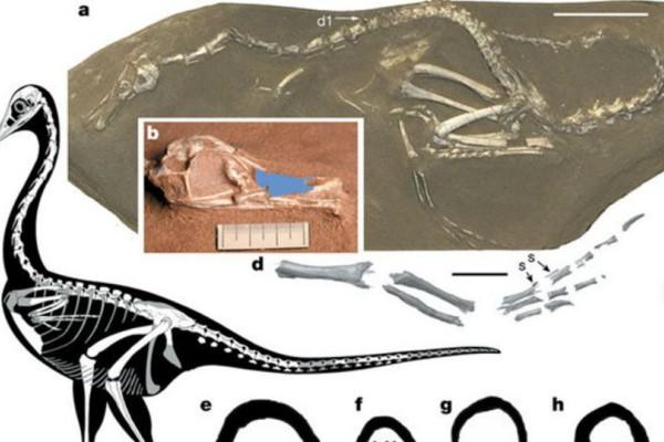 Ο πρώτος αμφίβιος σαρκοβόρος δεινόσαυρος είχε... λαιμό κύκνου και πόδια πάπιας (photo)