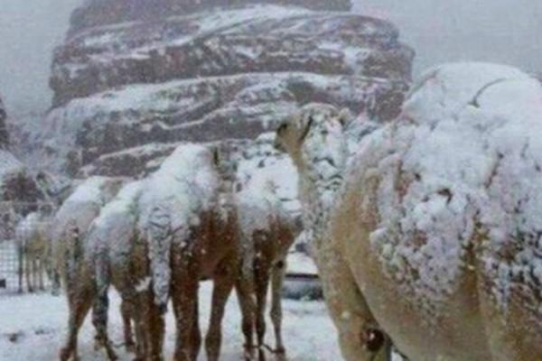 Μοναδικό θέαμα: Το' στρωσε στη Μέση Ανατολή -  Γεμάτες χιόνι οι καμήλες! (Photos + video)