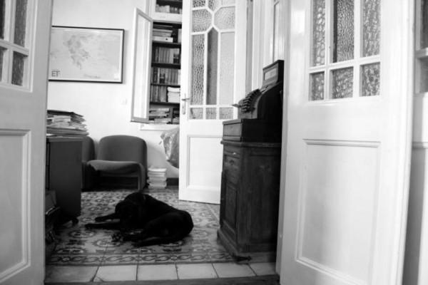 Φρίκη στην Πάτρα: Κοίταξε μέσα στο σπίτι της και έπαθε πλάκα! Η εικόνα που είδε από το πεζοδρόμιο και δεν πίστευε στα μάτια της!