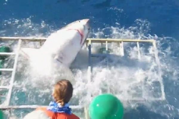 Τρομακτικό βίντεο: Καρχαρίας μπαίνει μέσα σε κλουβί με δύτη!