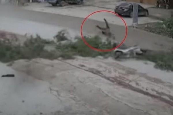 Τρομακτικό βίντεο: Δείτε την στιγμή που δέντρο πέφτει ακριβώς μπροστά σε μοτοσικλετιστή