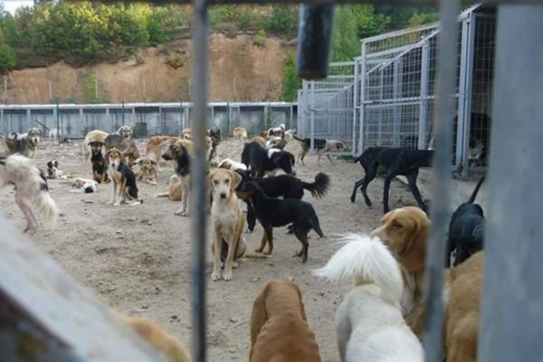 Κτηνωδία: Βρέθηκαν ακρωτηριασμένα δύο κουτάβια!