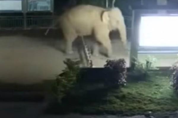 Κίνα: Ελέφαντας άλλαξε... χώρα, διασχίζοντας με το έτσι θέλω, τα σύνορα της χώρας!