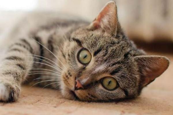 Το ήξερες; Οι γάτες τρώνε με το δεξί χέρι και οι γάτοι με το αριστερό!