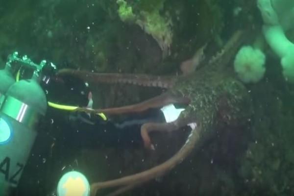 Βίντεο - σοκ: Χταπόδι καταπίνει το κεφάλι δύτη! (photos)