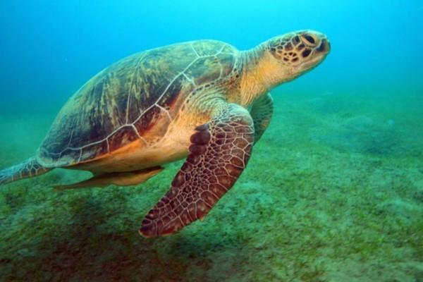 Οκτώ παιδιά πέθαναν αφότου έφαγαν κρέας θαλάσσιας χελώνας!