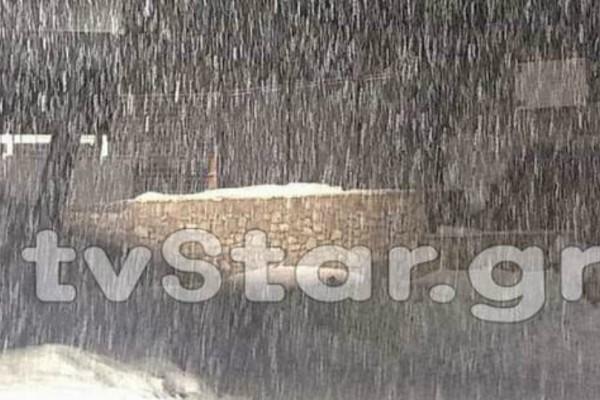 Μαγικές εικόνες: Έντονη χιονόπτωση στον Παρνασσό (video)
