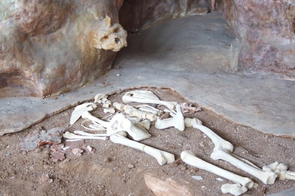 Σπάνια ευρήματα στην Ιρλανδία: Εντοπίστηκαν ανθρώπινα οστά από το 3.600 π.Χ.