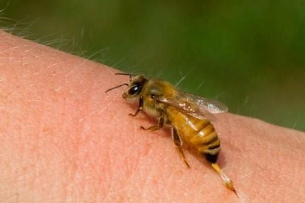 Ηλικιωμένος κινδύνευσε να πεθάνει από τσίμπημα μέλισσας!