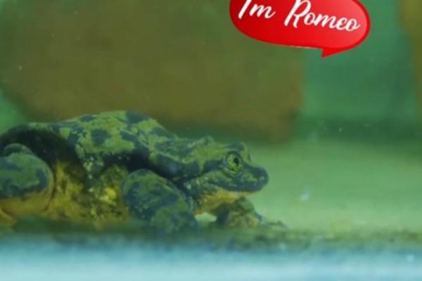 Ο πιο μοναχικός βάτραχος του κόσμου ψάχνει την...αγάπη (video)