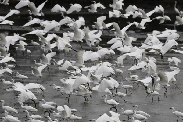 Η φωτογραφία της ημέρας: Ερωδιοί διακρίνονται σε λίμνη στην περιοχή Noveleta στις Φιλιππίνες!