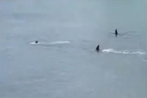 Βίντεο - σοκ: Παιδιά ουρλιάζουν όταν καταλαβαίνουν τι ακριβώς κολυμπάει δίπλα τους!