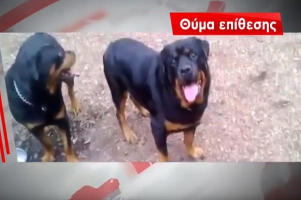 Θρίλερ στην Παλλήνη: Λυκόσκυλο επιτέθηκε και δάγκωσε περαστικούς! (video)